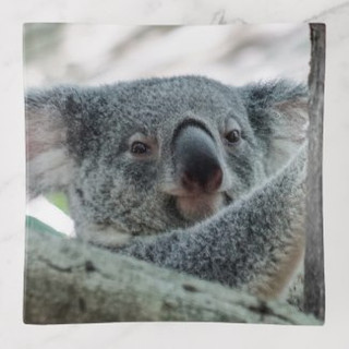 Koala Bear Glass Trinket Tray