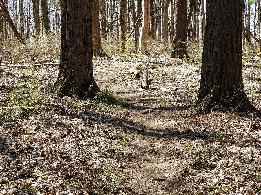 Winding trail at Spring Valley Nature Preserve in Granville Ohio