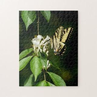 tiger_swallowtail_butterfly_on_honeysuck