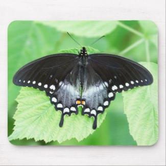 Spicebush Swallowtail Butterfly Mousepad