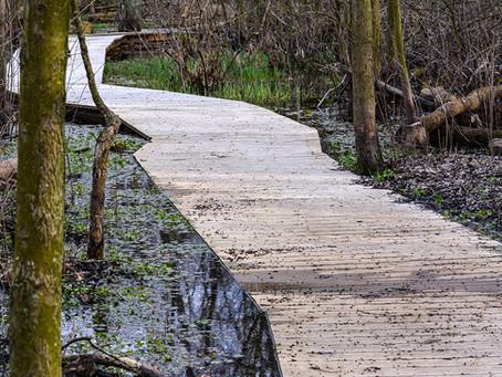Calamus Swamp Preserve
