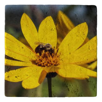 Mining Bee on Yellow Wildflower Stone Trivet