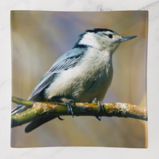 white_breasted_nuthatch_trinket_tray-r89