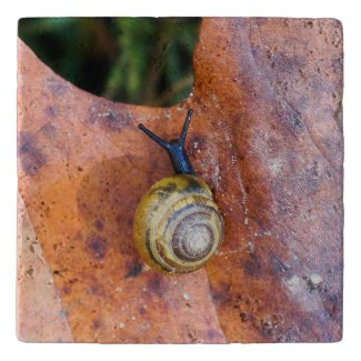 Snail Stone Trivet