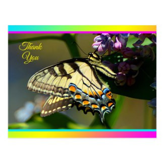 Black and Yellow Butterfly on Lilac Bush
