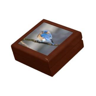 Eastern Bluebird on Limb Keepsake Gift Box