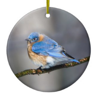 Eastern Bluebird on Limb Ceramic Christmas Ornament