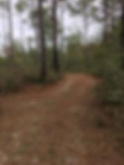 Ponce De Leon State Park Trails