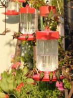 Hummingbird Feeder Types: Saucer vs. Vacuum Feeders