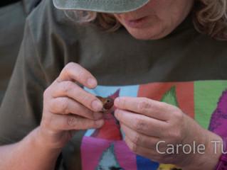 Bandas de colibríes en Arizona con Sheri L. Williamson