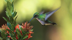 Basic Facts About Hummingbirds