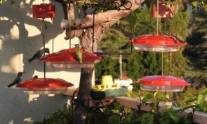 Hummingbird Feeder Types: Saucer vs. Vacuum Feeders