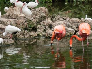 Flamingo Gardens, Davie, Florida