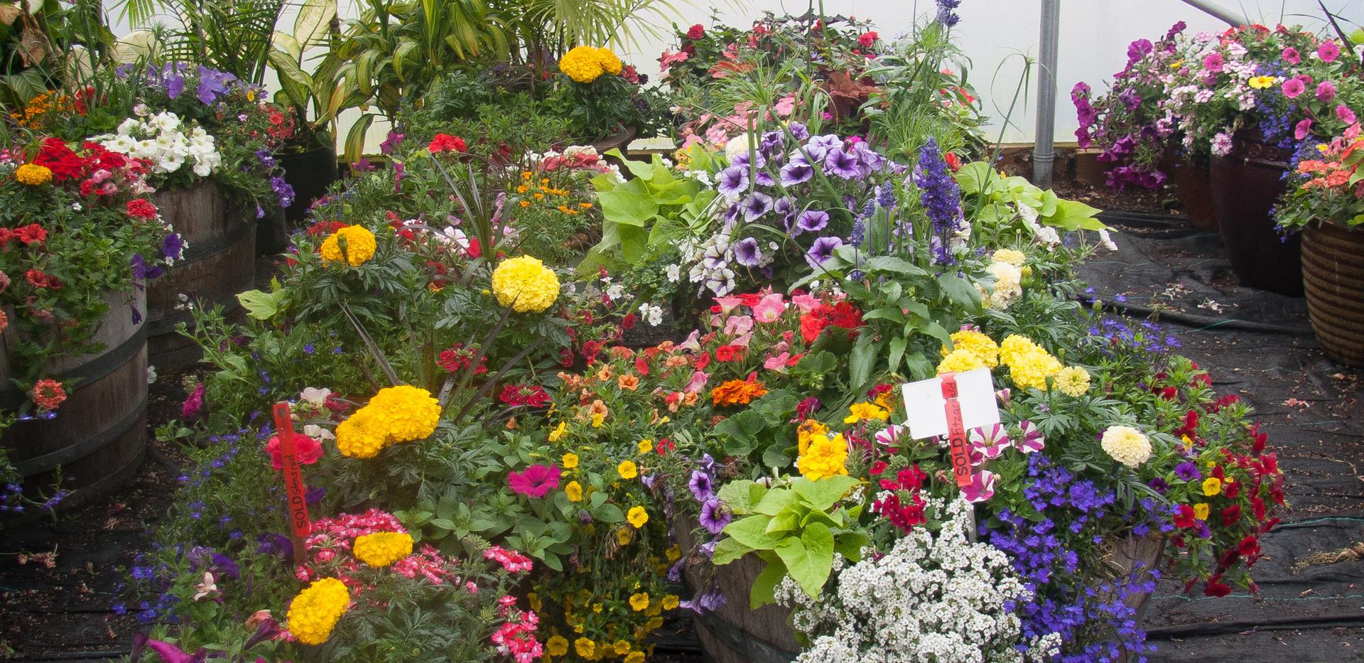 Custom Plantings 2017-160.jpg
