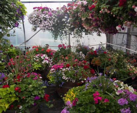 Custom Plantings 2017-158.jpg