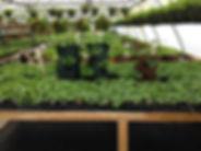 greenhouse-4-676x507.jpg