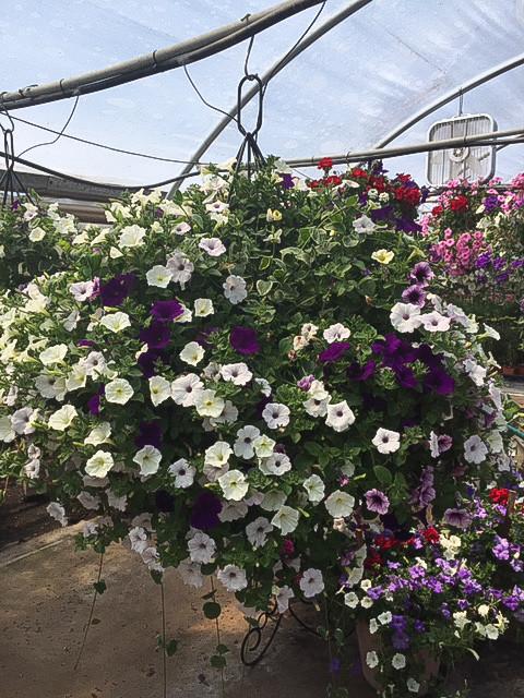 Custom Plantings 2017-15.jpg