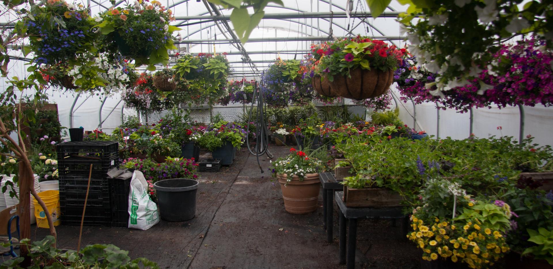 Custom Plantings 2017-150.jpg