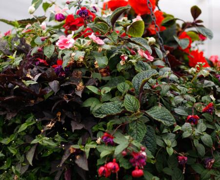 Custom Plantings 2017-144.jpg