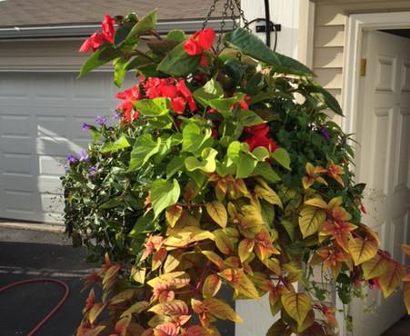Custom Plantings 2017-37.jpg