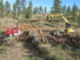 mechanical logging 3.jpg
