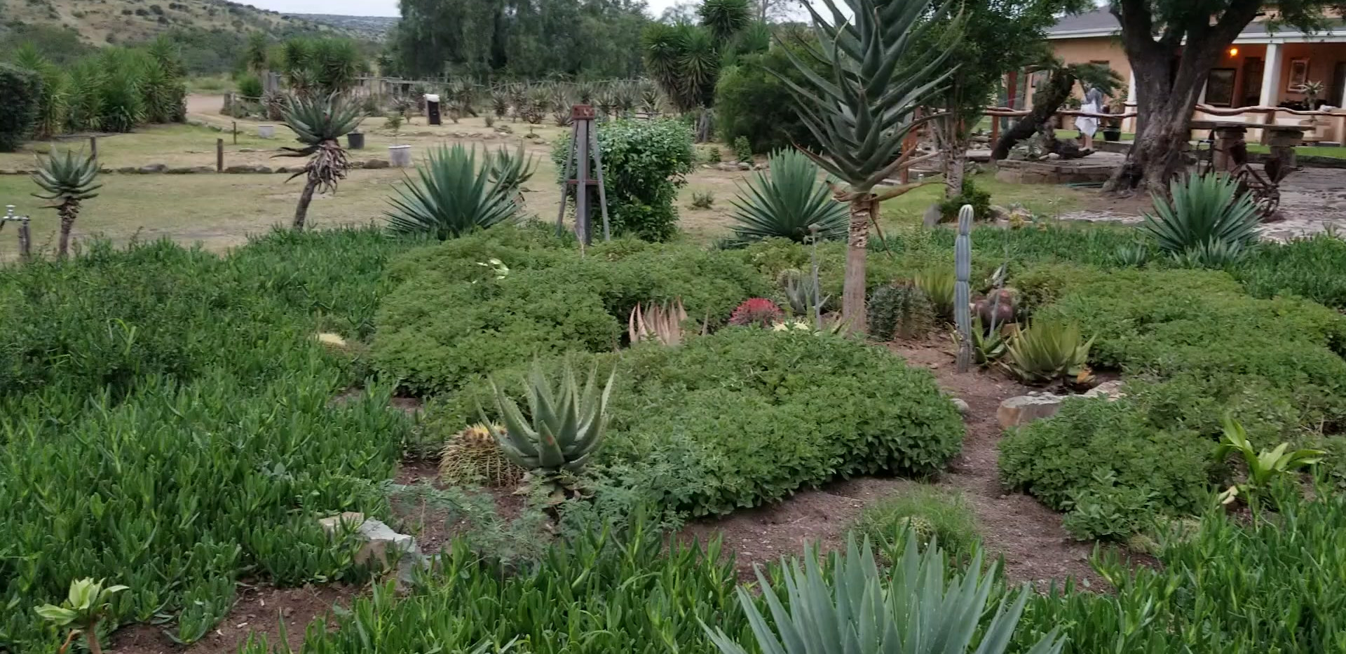 Hunt SA Aloe Garden