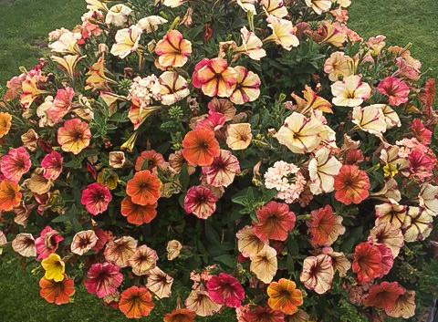Custom Plantings 2017-148.jpg