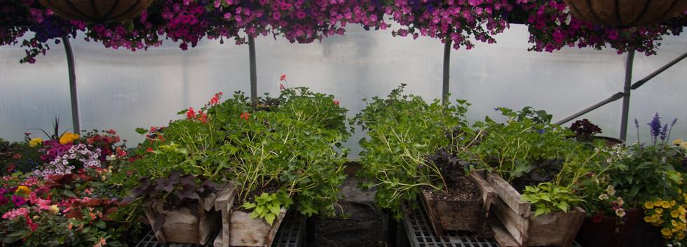Custom Plantings 2017-151.jpg
