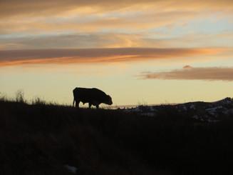 Lawlor Ranch