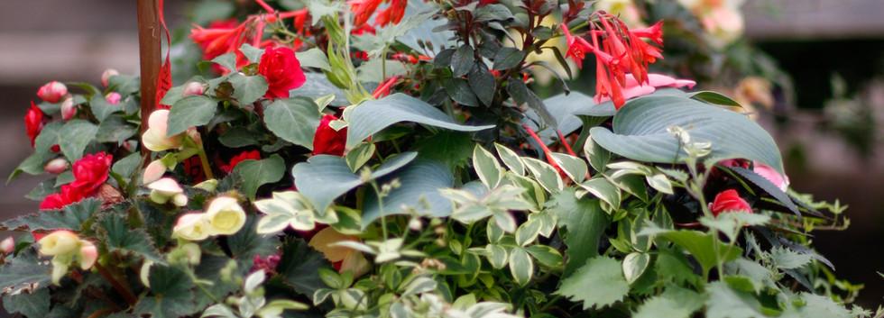 Custom Plantings
