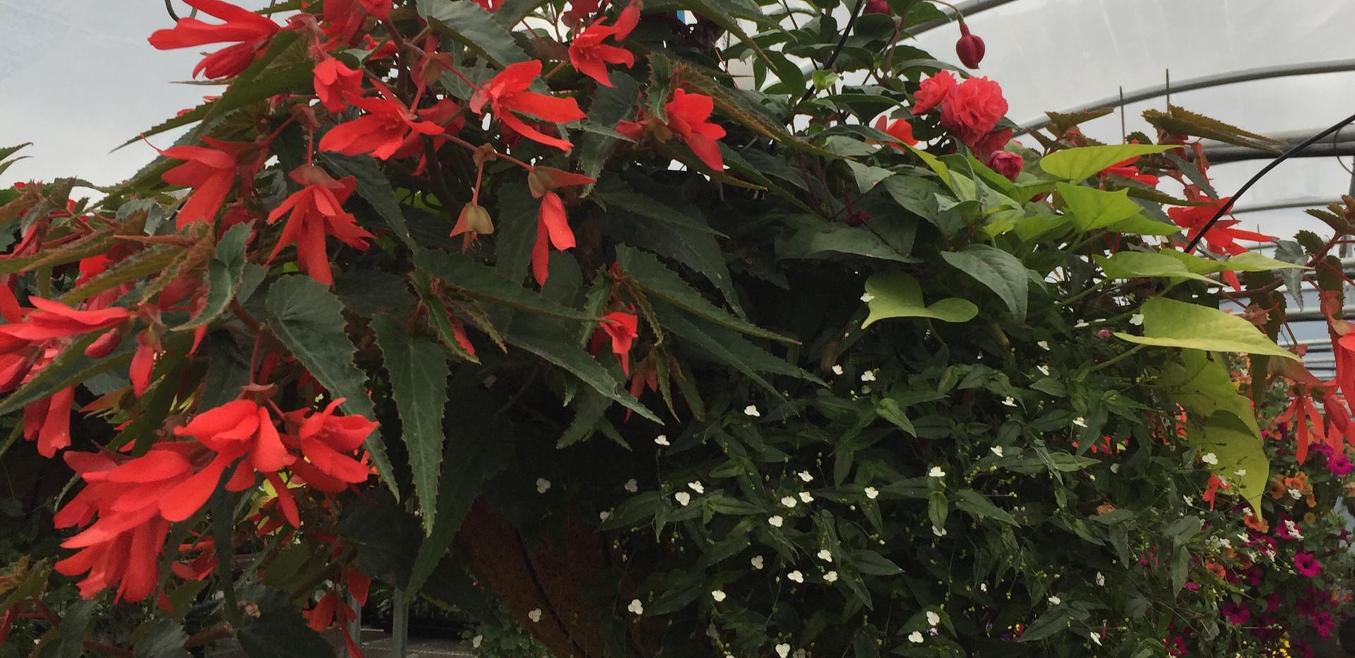 Custom Plantings 2017-147.jpg