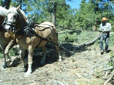horse logging.jpg