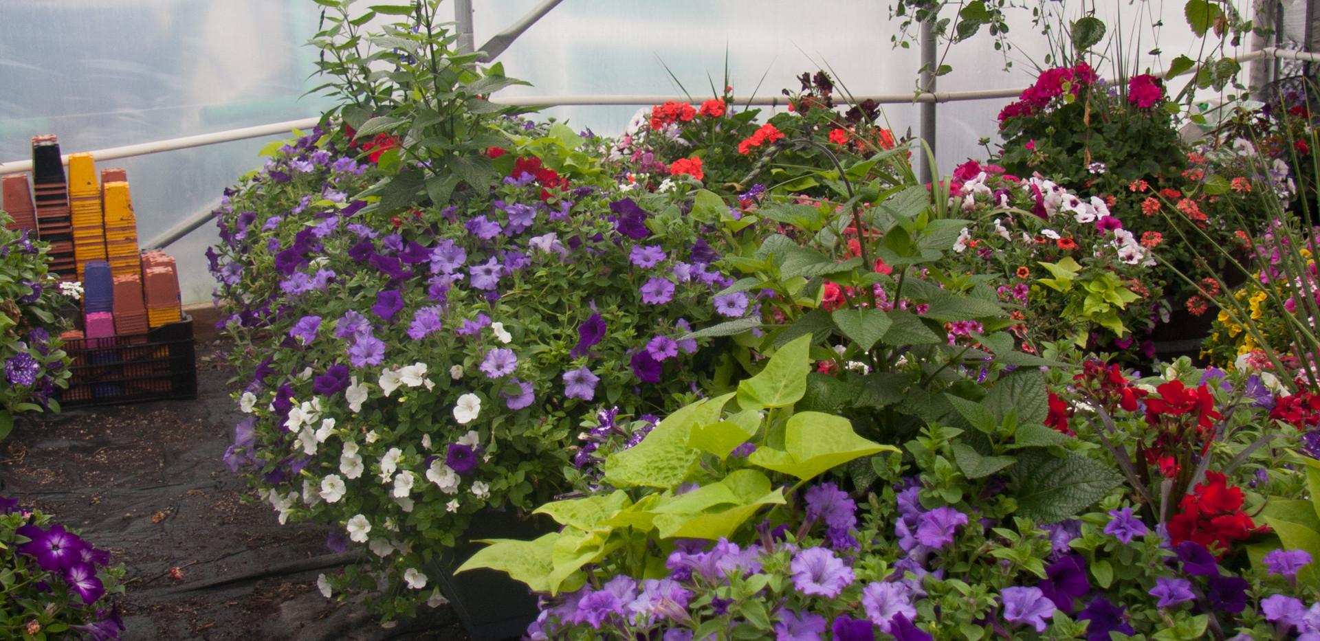Custom Plantings 2017-156.jpg