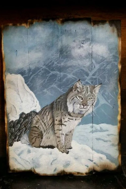 Montana Bobcat