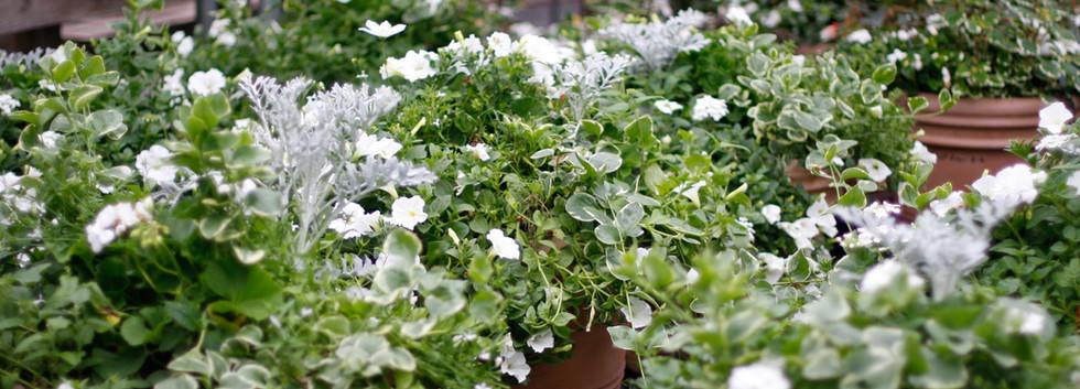 Custom Plantings 2017-143.jpg