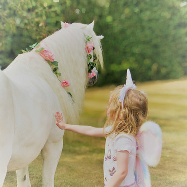 The wonder of meeting a unicorn