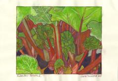 Rabarber-oerwoud