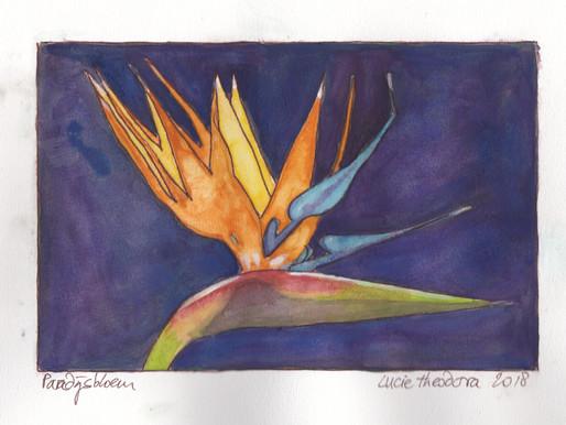 De paradijsvogelbloem