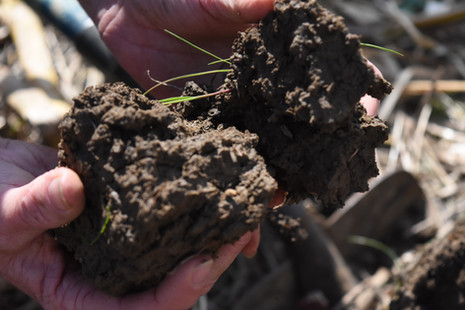 Healthy Soil, White River Bottom, Knox C