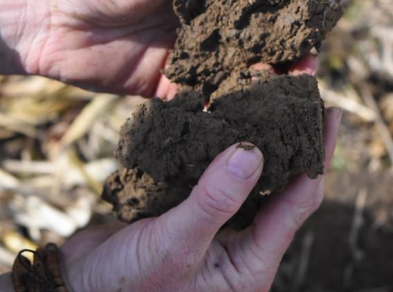 Healthy, porous soil in a field using co