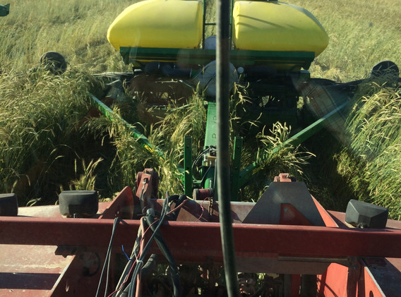 Planting green into cereal rye.jpg