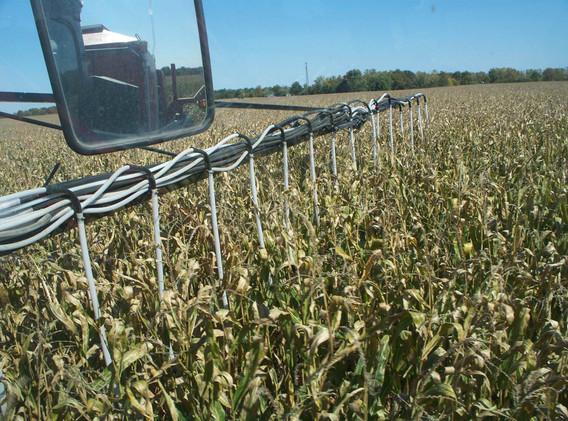 Seeding Cover Crop into Standing Corn.jp