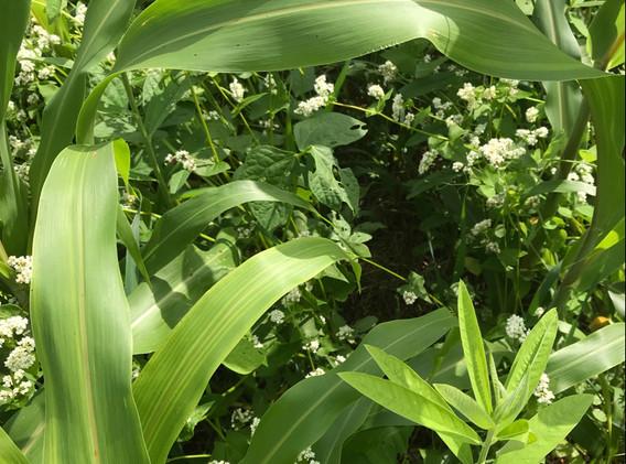 16-way cover crop mix.jpg