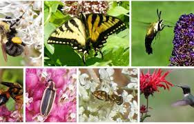 The Role of Pollinators in Agriculture