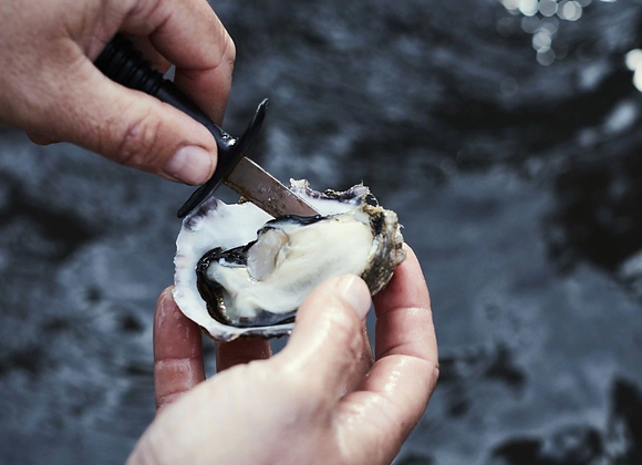 Pacific Oyster Shucked FRESH