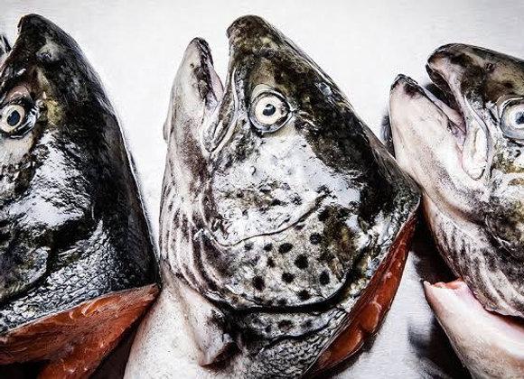 Fish Heads FRESH