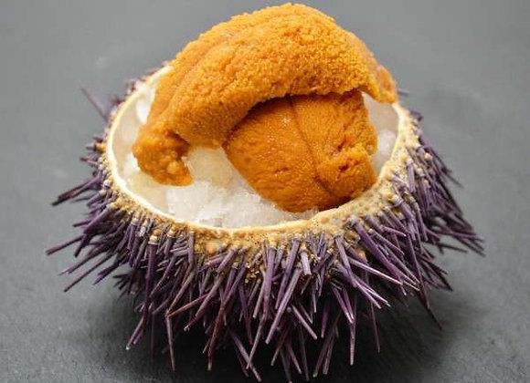 Australian Premium Gold Sea Urchin Roe FROZEN