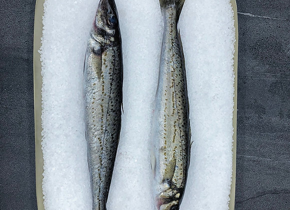 South Australian King George Whiting Whole Cleaned FRESH