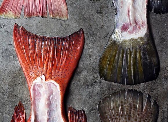Fish Bones FRESH