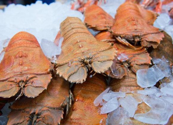 Australian Moreton Bay Bugs Raw FROZEN